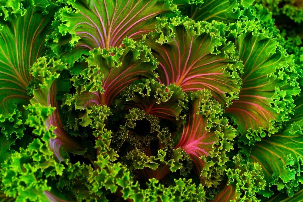 plant-690051_1920